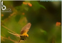 Beauty of Nature - Broz - Ningombam 3