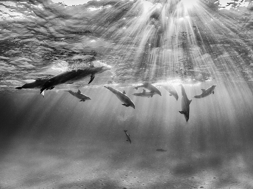 dolphins-bimini-bahamas_78165_990x742