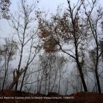 Jungle in Tamu District, Myanmar. Express photo by Deepak Shijagurumayum