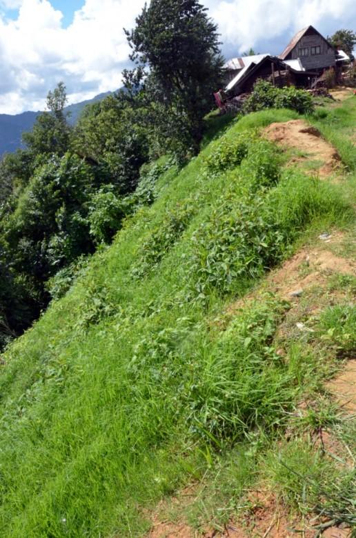 Ngainga  landscape. Photo- Chingtham Balbir Khuman