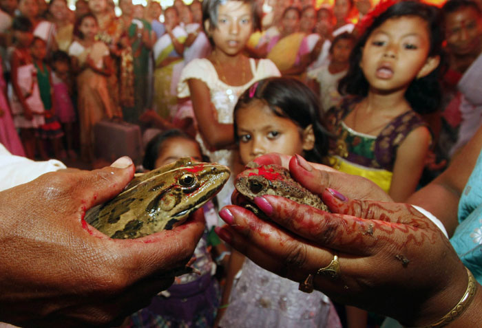 The frog marriage is a traditional ritual observed by the rural folk to appease the gods to bring in rain and ensure a good harvest. (Source: Reuters/File)