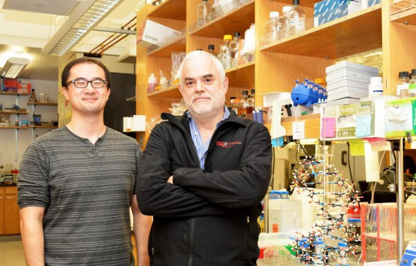 Floyd Romesberg, right, with graduate student Yorke Zhang (The Scripps Research Institute)