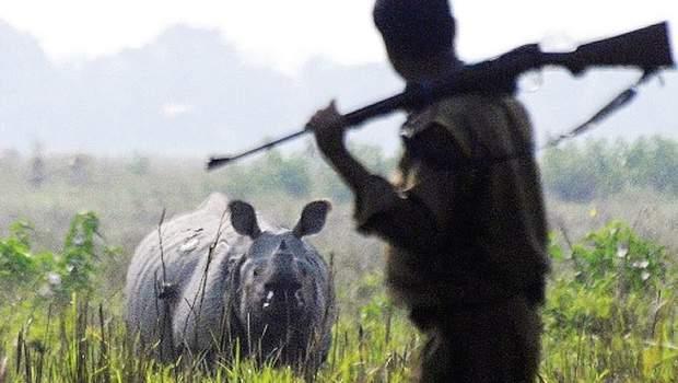 rhino_poaching