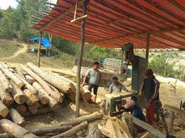 gwarok reserve forest illigal tree felling