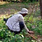 MAPC Members Planting Tree Samplings at Eshingthingbi Lake Chandel, Manipur