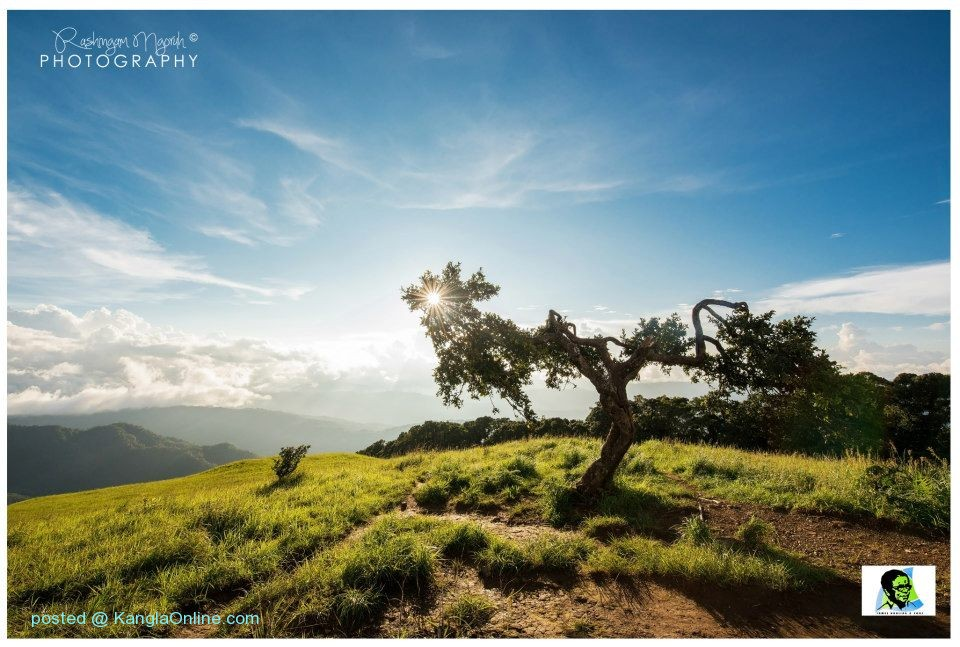 The Monkey Tree Shirui Hills Ukhrul Manipur