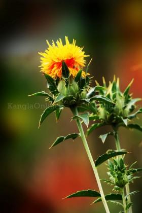 Flowers at MMRC Park Khangabok